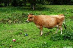 Golf Paysan à la ferme aux 5 saisons - 12