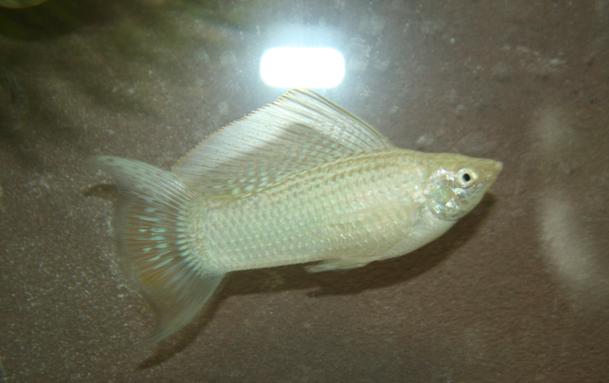 Fish Photo with Camera Flash