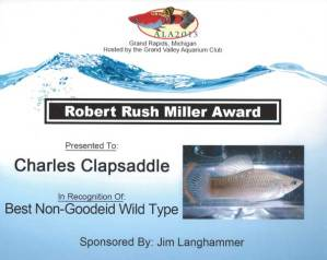 The American Livebearer Association's 2013 Show