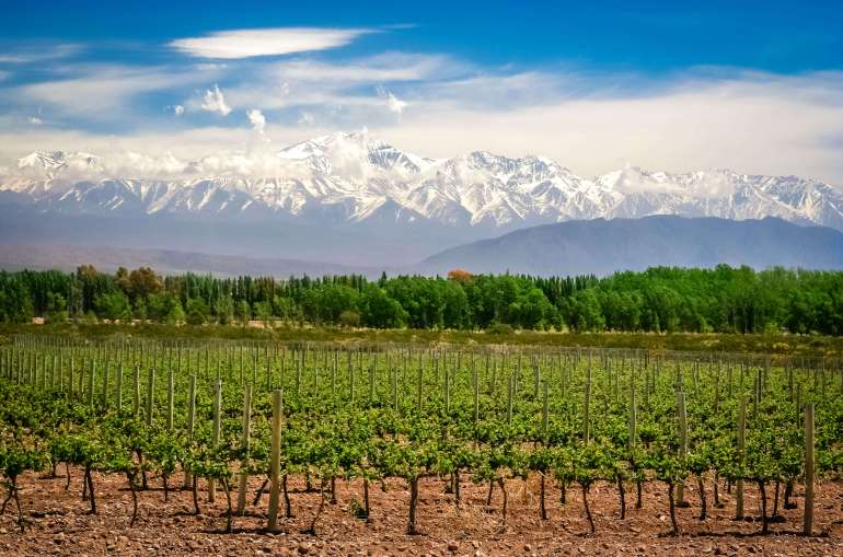 mendoza-vineyard