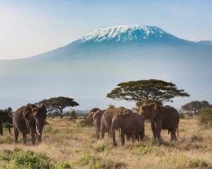 kenya-safari-experience-kilimanjaro