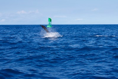 Another spinner dolphin jumping