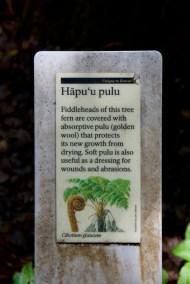 The hāpu'u Pulu story