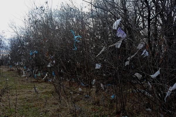 Ветер разнес пакеты со свалки в Каневской на всю ближайшую лесополосу. Фото: Андрей Кошик