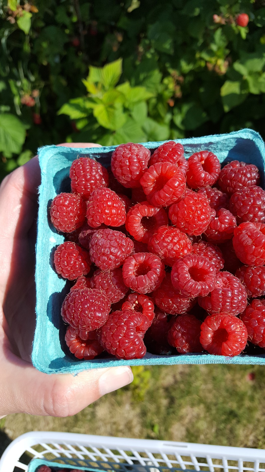Close up of raspberries