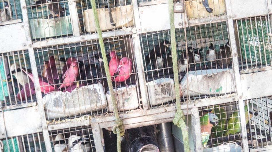 Bird Club