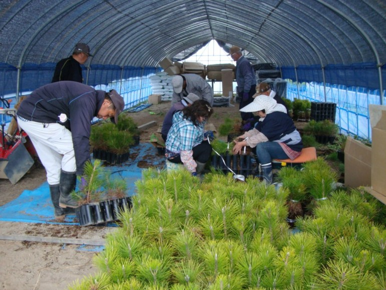 the_members_of_the_association_removing_the_seedlings