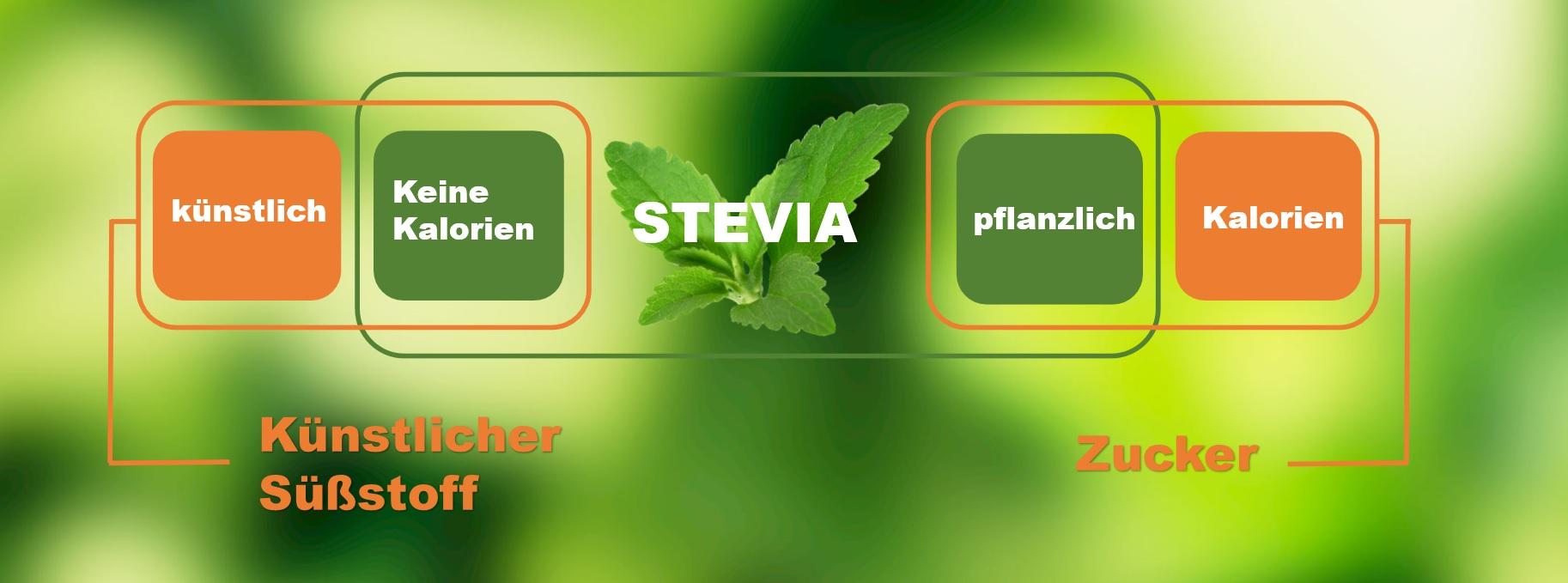 Zucker vs. Stevia stevia süssung