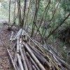 竹を伐りまくる