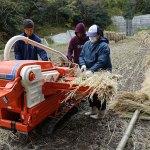 竹の片付け、脱穀終了