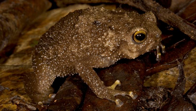taitafrog