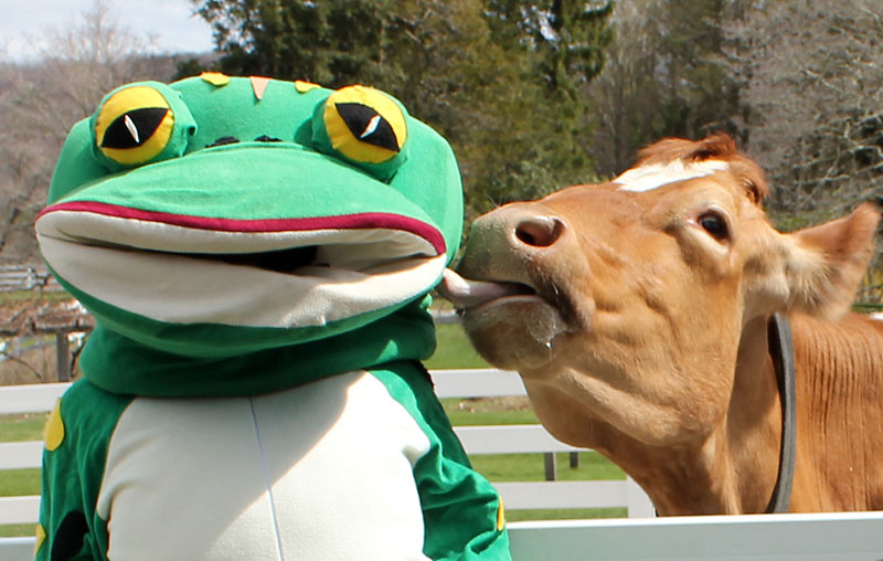 p1-frog-and-cow