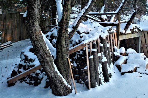 Snow covering trees and wood pile