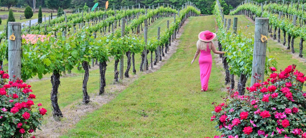 An Afternoon at Overmountain Vineyards