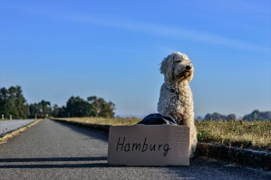 Travel with your dog is possible with some preparation