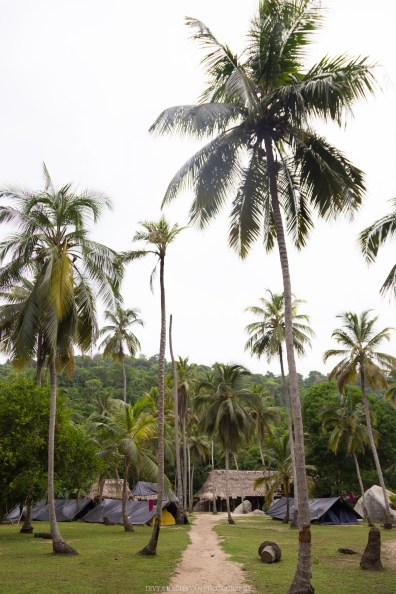 The coconut trees of Tayrona National Park, Santa Marta, Colombia // Photos to inspire you to visit Colombia