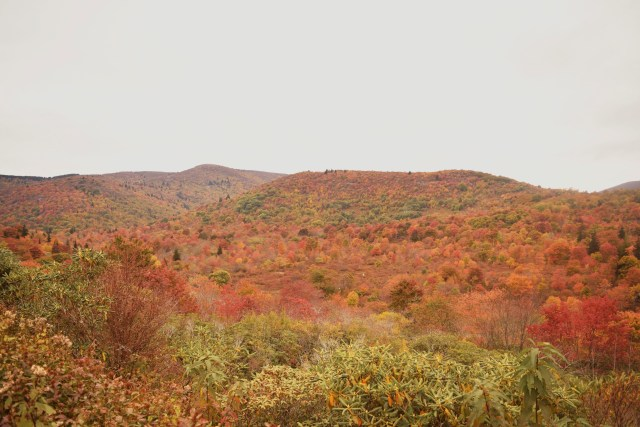 fall colors of the blue ridge mountains off of the blue ridge parkway