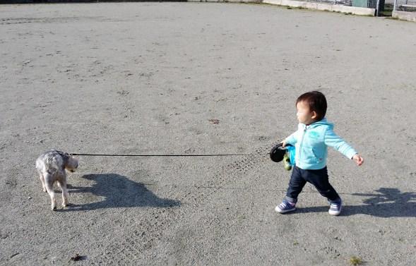 Toddler Shoes - See Kai Run Toddler Shoes