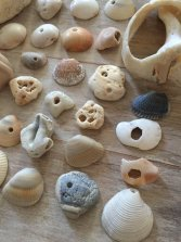 Non Toxic Christmas Decorations - Beach Finds 30 Shells and Shards with Natural Holes