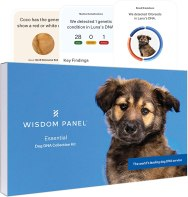 Genetic Testing - Wisdom Panel Essential, New and Improved Dog DNA Test for Ancestry, Traits and Medical Complications