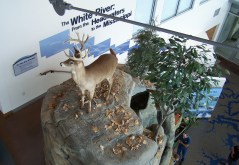 4) Deer on display