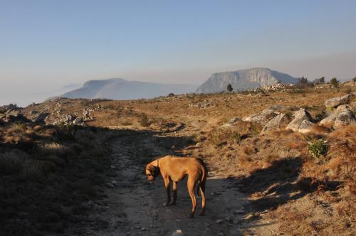 Jenni on the World's View escarpment