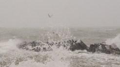 Doar câțiva albatroși mai temerari s-au avântat în vântul puternic și valurile reci. FOTO Cătălin Schipor