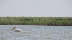 Iubitorii de natură pot vizita Biosfera Deltei Dunării într-un mod deosebit. FOTO CNIPT Tulcea