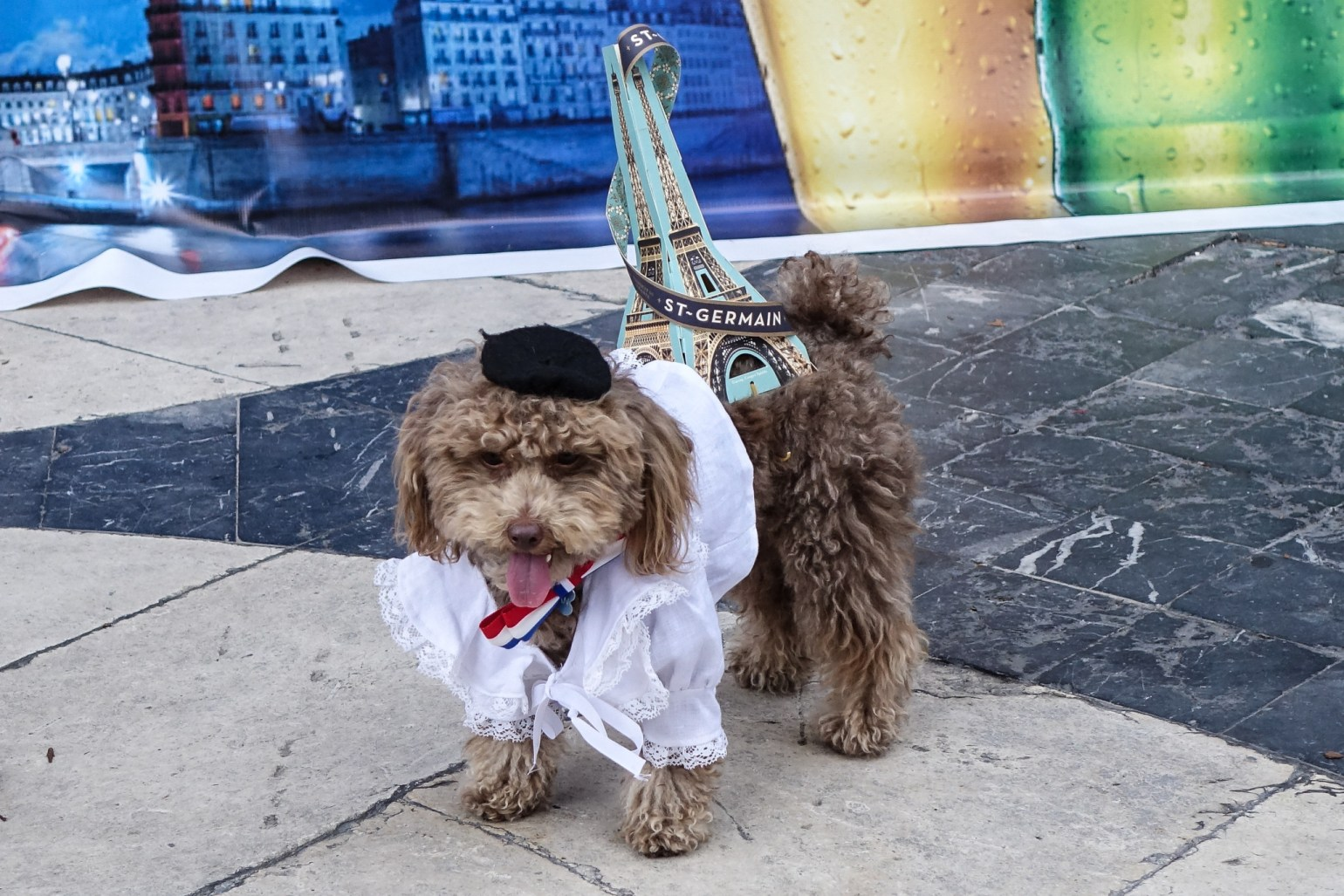 A pup dressed for Bastille Day Photo: Paul Broussard