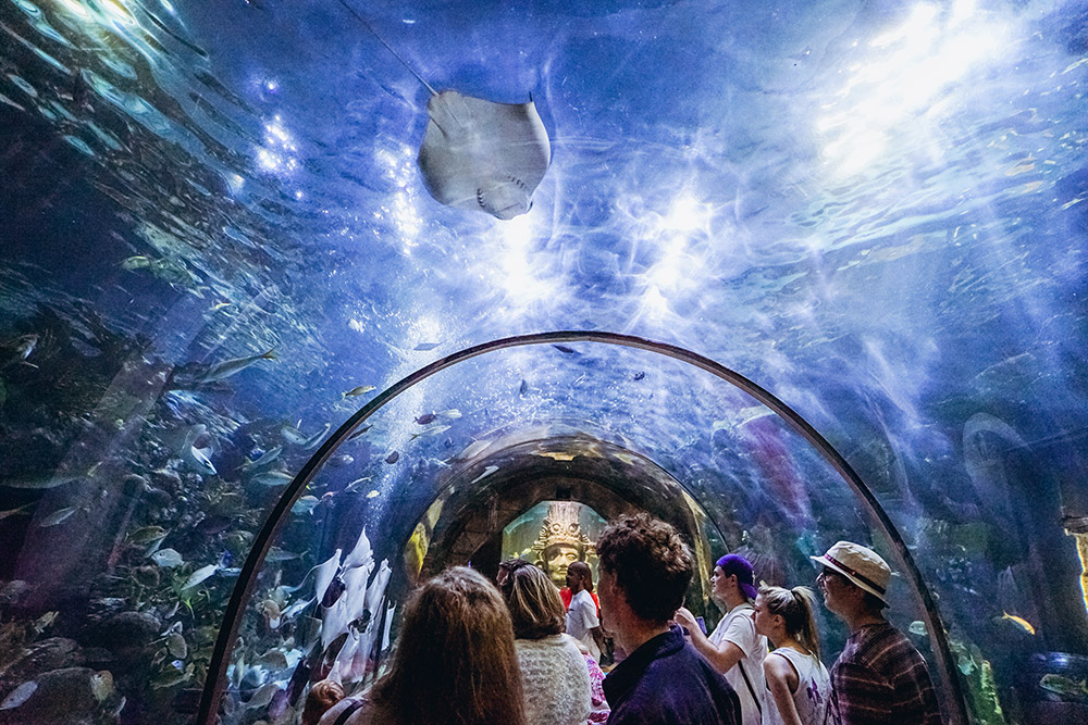 Take in the wonders at the Audubon Aquarium (Photo: Paul Broussard)