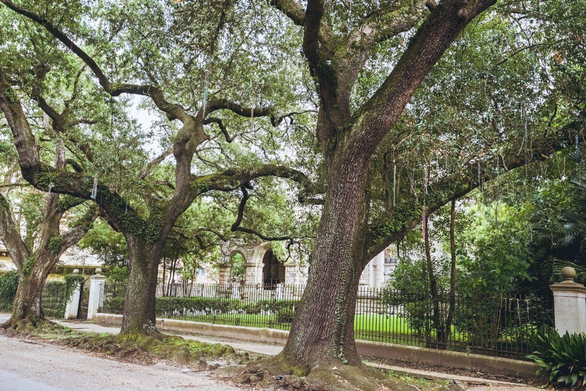 manusco oaks