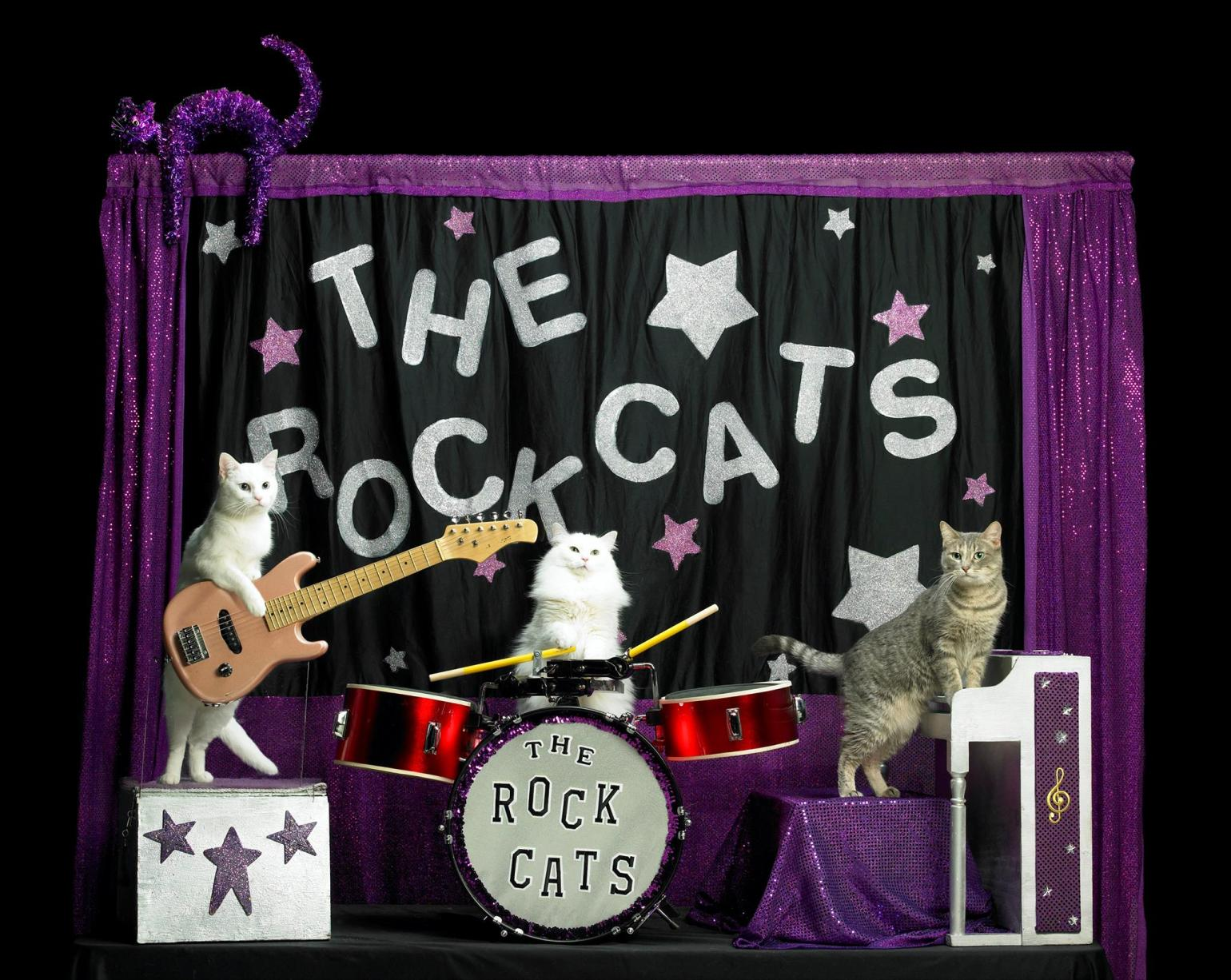 """The Rock Cats, part of the Amazing Acro-Cats, will play seasonal classics like """"A Cat in a Manger"""" and """"God Rest Ye Merry Kittens."""" (Photo via The Amazing Acro-Cats Meowy Catmas on Facebook)"""