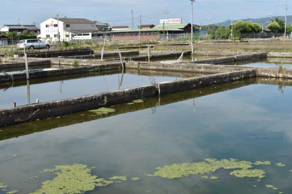 金魚資料館