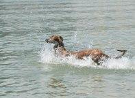 ...schwimmen!