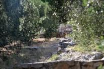 ein Teil des Gartens...