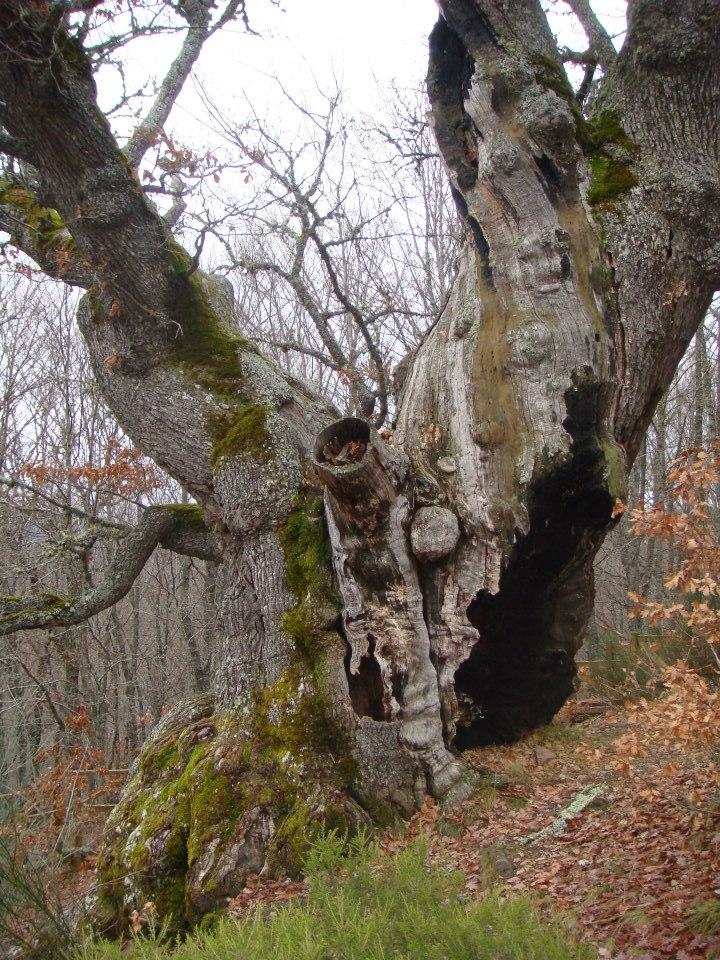 Espacios sagrados y Druidismo en la Hispania Céltica