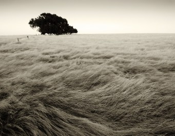 flattened-grass-1024x688