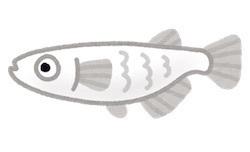 fish_medaka_character.jpg
