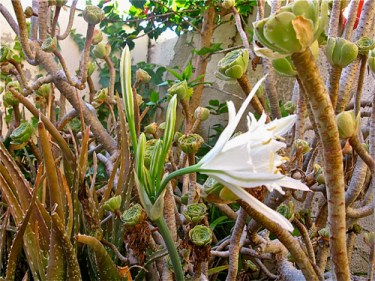 Aloe vera magical plant