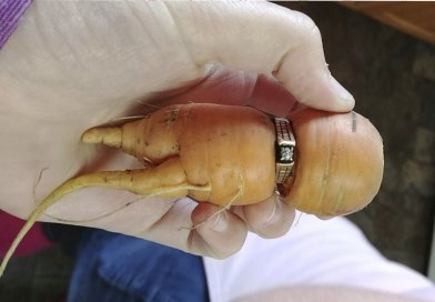 Lucky carrot: Alberta woman finds mother-in-law's lost ring