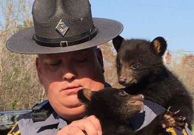 This Police Officer Saved Two Bear Cubs When Their Mum Was Hit By A Car