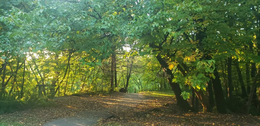 Moir Park in the Fall