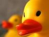 thumbs_duckcloseup