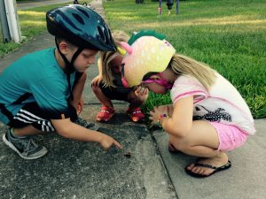 Lynden (age 8), Everett (age 3) and Vivi (age 7) found a flattened bug on a bike ride (June 2016)