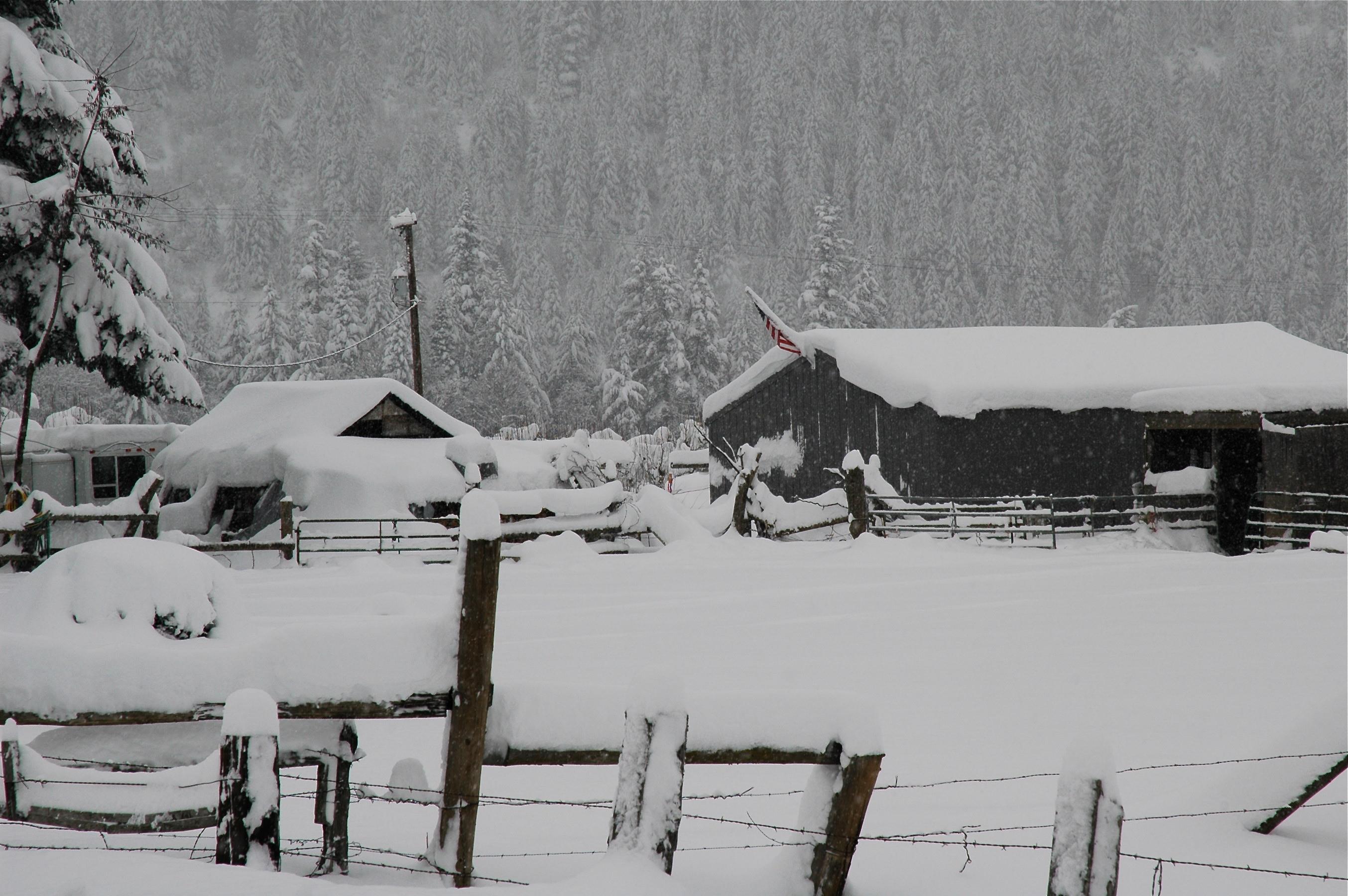 Lobo's snowy neighborhood
