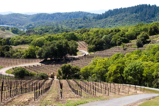 Hillside vineyards at Buehler