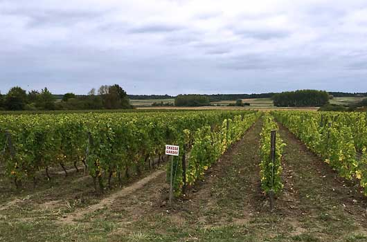 loire valley vinyards