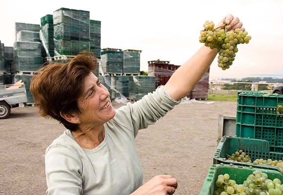 Lady with Albarino grapes