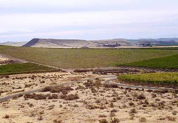 desert vineyards
