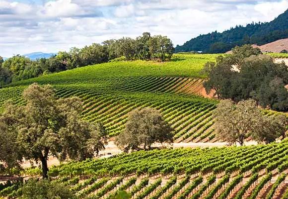 wine country photos